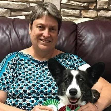 Cardigan Welsh Corgi Puppies for Sale in Virginia ...