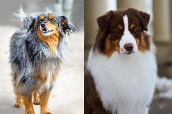 The fundamental difference between purebred dogs and well-bred dogs